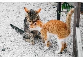 两只黑红相间的小猫靠在草地上_398495101