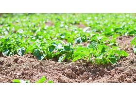 从地上长出来的绿色植物_99100901