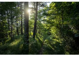 令人叹为观止的有很多树木的森林_1130126801