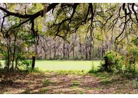 令人惊叹的野生森林的美丽风景_767782401