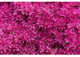 令人着迷的粉红色花卉图画_1072074401
