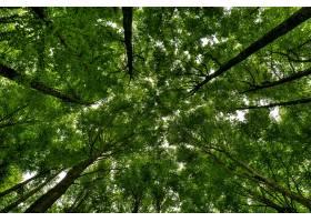 低角度拍摄美丽绿色森林中的高大树木_918397701