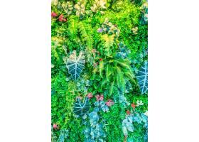 壁纸公园氛围种上漂亮的草_124418701