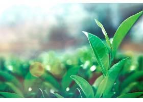 保健茶叶_419133501