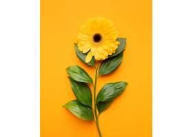 俯瞰盛开的花朵_1247936901