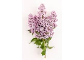 俯瞰花朵紫色美丽孤立在白色的地板上_872866801