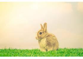 复活节绿草地上的兔子滤波图像处理_101008501