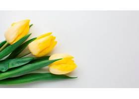 俯瞰郁金香花朵_1247930001