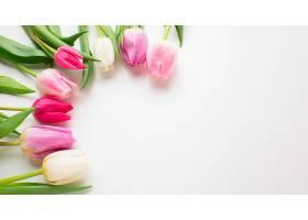 俯视郁金香花朵带文案空间_1247930501