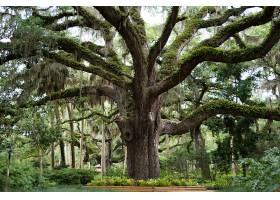 公园里长满绿叶和苔藓的大树_997153601