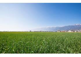 农场里的绿色景观_88435701