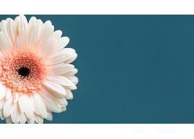 巨型盛开的花朵的特写_1255883401