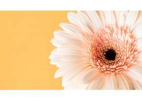 巨型盛开的花朵的特写_1255886201