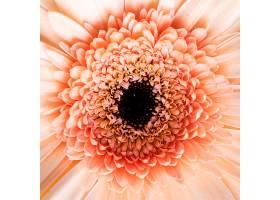 巨型盛开的花朵的特写_1255886501