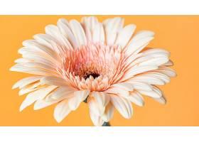 巨型盛开的花朵的特写_1255886801
