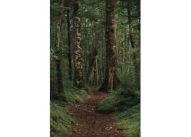垂直拍摄的一片美丽的森林中间有一条棕色_807041501