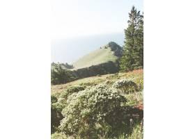 垂直拍摄的灌木丛和山脉_1075885001