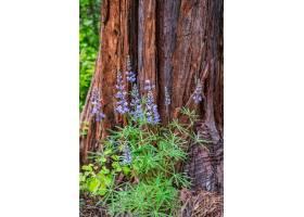 垂直拍摄的紫色高大的花朵环绕着一棵棕色的_1134302301