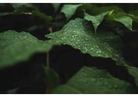 带着露水的野绿叶_754654001