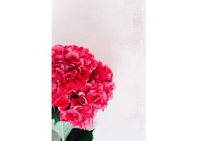 垃圾背景下红色绣球花的特写_317071201