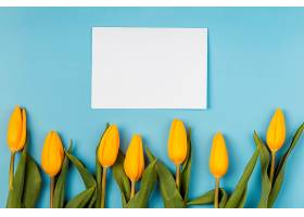 带空白卡片的黄色郁金香_1206774801