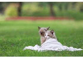 一只可爱的小猫坐在公园的绿草地上_559808001