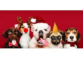 一群穿着圣诞服装的小狗_353215001