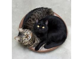 两只可爱的毛茸茸的小猫躺在篮子里惊讶地_918397801
