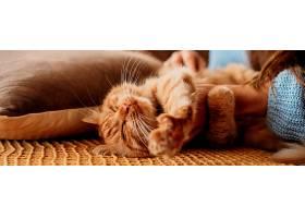主人抚摸可爱的猫_1089204901