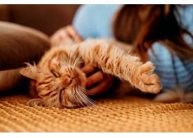 主人抚摸可爱的猫_1089205101