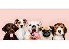 可爱小狗的集体照_353214801