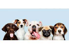 可爱小狗的集体照_353214901