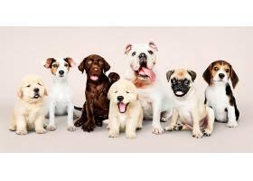 可爱小狗的集体照_353242001