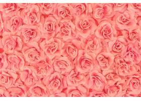 玫瑰色背景_124035201