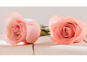 用玫瑰花特写看情人节的概念_1110632801