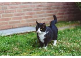 红砖墙前草地上一只可爱的黑猫的美丽镜头_1094471601
