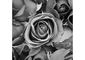 美丽的十一月花束背景_104766401