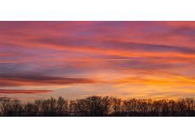 在美丽的粉色日落期间多云天空下的树木剪_885768701