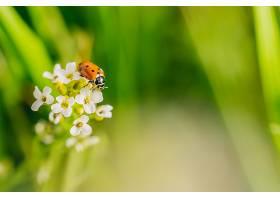 在阳光明媚的日子里一只瓢虫选择性地聚焦_1097876801