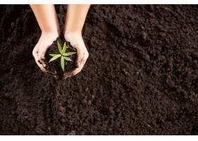孩子们的手握着并照看着一株绿色植物_501692501图片