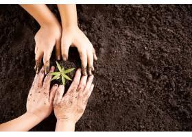孩子们的手握着并照看着一株绿色植物_501692601图片