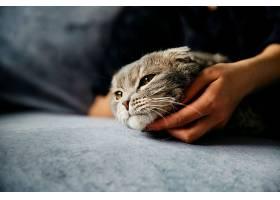 女人抚摸可爱的懒猫_472485501