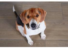 安静而善良的狗坐在地板上_1089886501