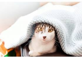 毛毯下的搞笑猫_279455601