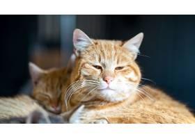 眼睛微微张开的棕色宠物猫的柔和焦点_1061379801