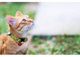 绿色花园中可爱的棕色家猫可爱的动物背景_380571301