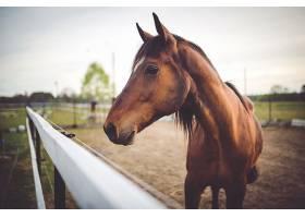 马头近距离观察_95981301
