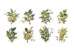 金绿色热带叶子婚礼花束与金色飞溅孤立水_50422160101