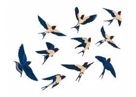 飞鸟各种景观采集组一群孤立在白色背景上_126990780101