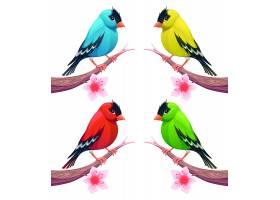 不同颜色的可爱小鸟_10892050101